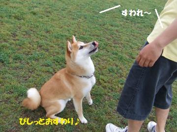 100_convert_20110524233817.jpg