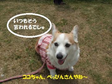 113_convert_20110508044223.jpg