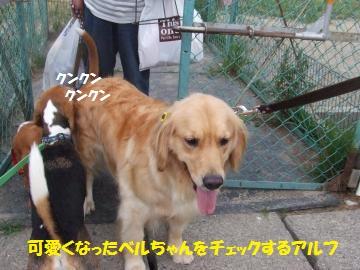 122_convert_20110721221923.jpg