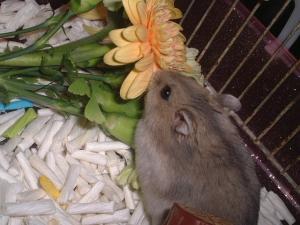 花束4ソニア