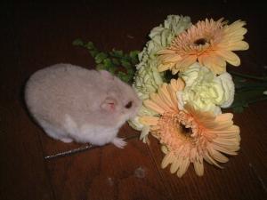 花束6ミーシャ