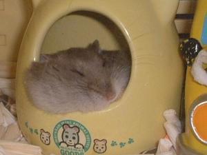 チアキ昼寝