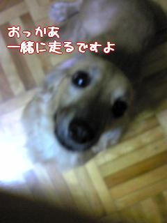 CAQJ8DQZ.jpg