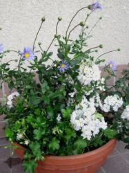 春の寄せ植えコンテナ