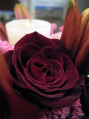 バラ「ブラックバッカラ」