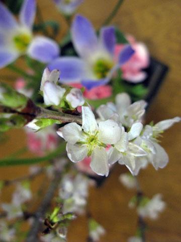 お花見アレンジメント