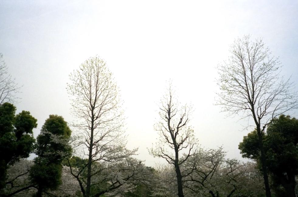 20070506_keshiki_a.jpg