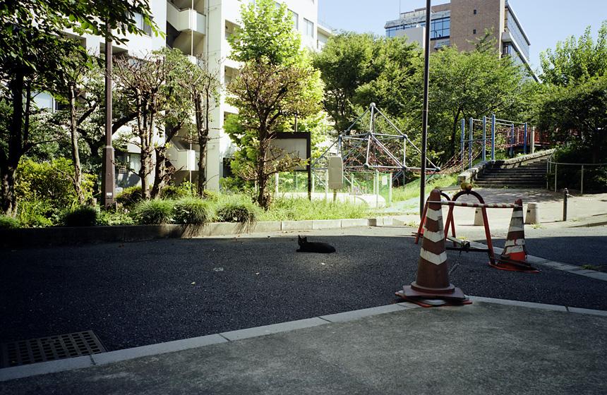 20070624_neko_b.jpg