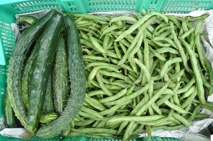 胡瓜とインゲン