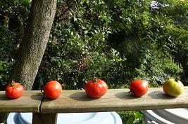 ボロトマト・・・カラスが食べるかな?