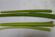 ズイキと里芋の茎
