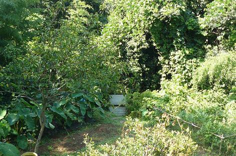 畑下段の入り口風景 ジャングルグルクル♪♪