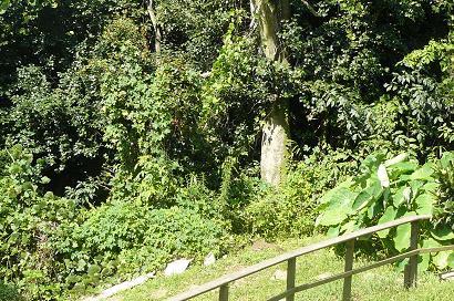 畑中段から見た風景 樹齢??年の大木