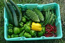 今日の収穫 何か少なくなってきたなぁ・・