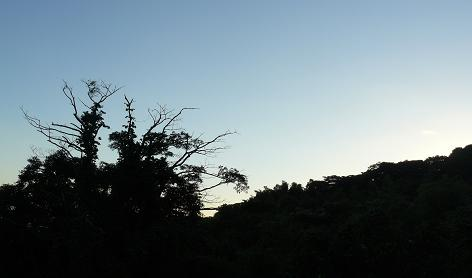 夕闇が迫る畑
