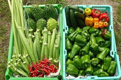 今日の収穫 満足、満足 (^^)