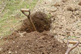 大根種蒔予定畝 石とり