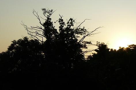 夕日が綺麗 (^^)