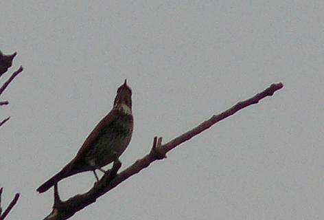 キョキョキョキョと鳴く鳥