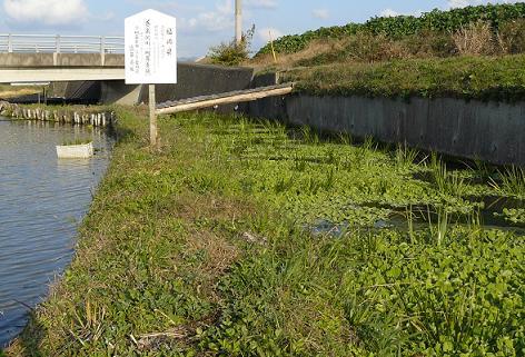 養魚河川(川茸養殖)
