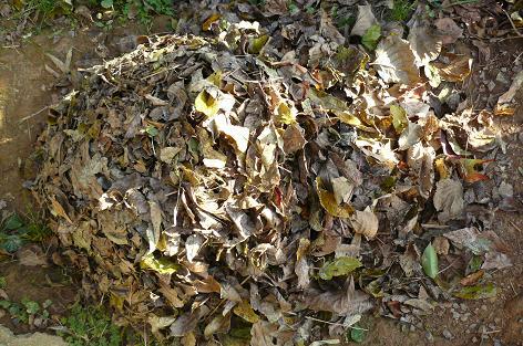 落ち葉を集める