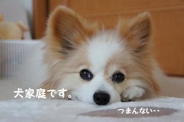 037_20110508185810.jpg