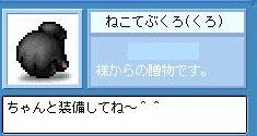 Maple1119-2.jpg