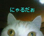 20070129125933