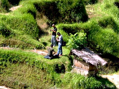 rice-terrace001.jpg