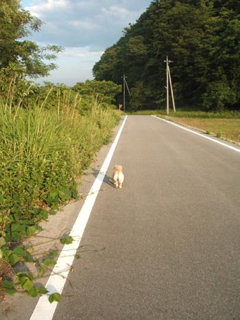 kisei_001.jpg