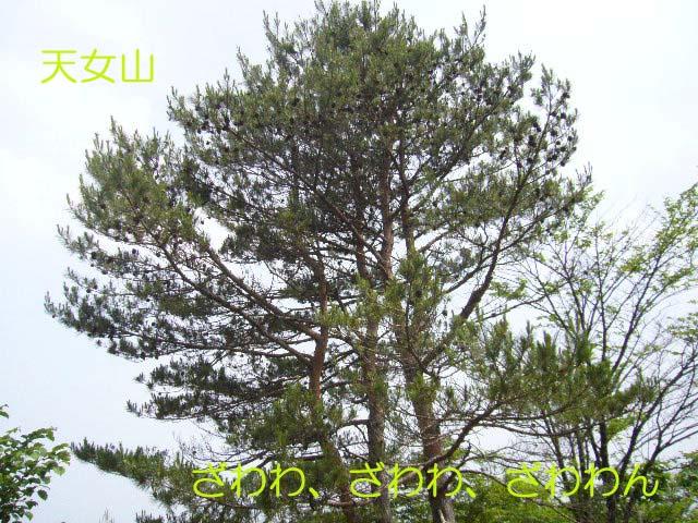 20070711153543.jpg