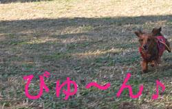 20071201200411.jpg
