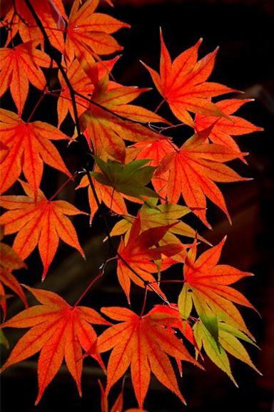 定光寺の紅葉1