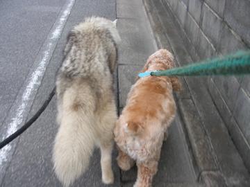 ジローちゃん散歩