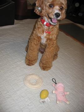 おもちゃ独り占め