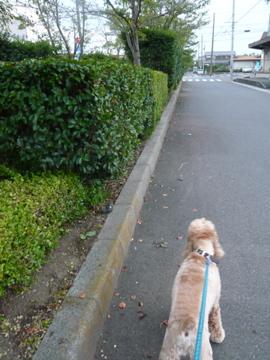 お散歩ひで