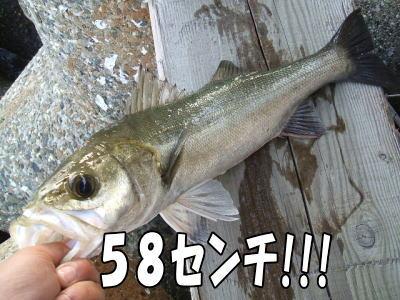 ハネ58センチ