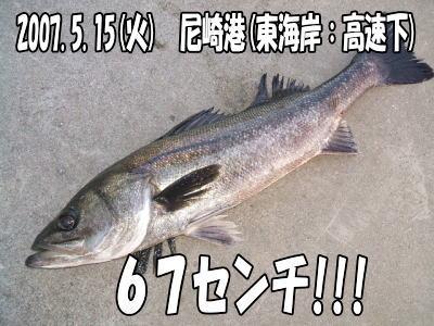 スズキ67センチ♪