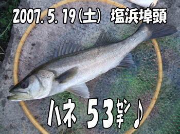 ハネ53センチ(´┏ω┓`)/