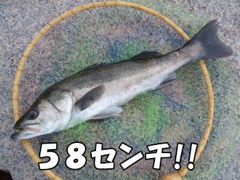 ハネ58センチ!