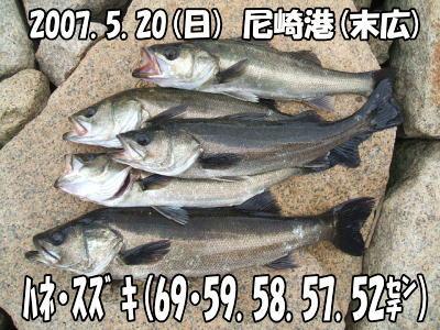 今日の釣果!