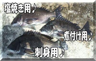 今日の釣果・・・・かな?