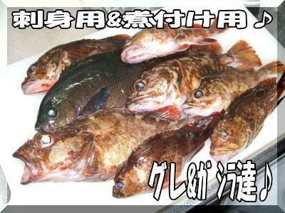 今日の釣果・・・・・かな?2