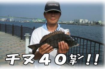 デグっちゃん、チヌ40センチ!