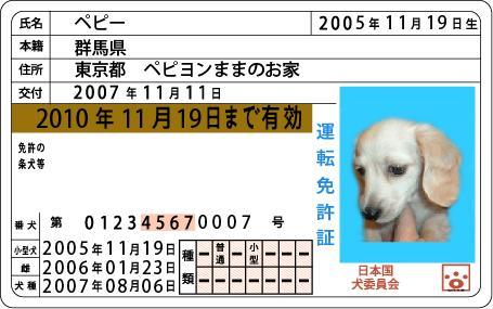 peppychan-menkyo.JPG
