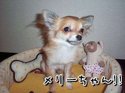 2007-11-19-03.jpg