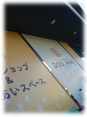 P8120055.jpg