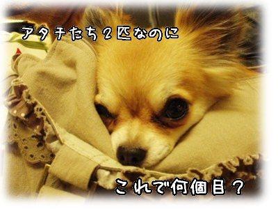 P8160092.jpg