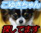 koyukibanner3.jpg