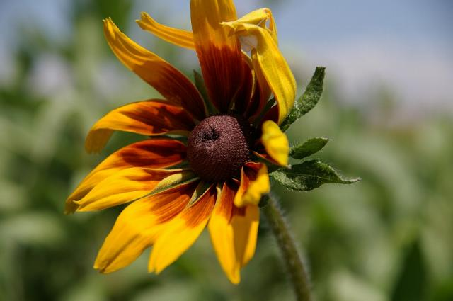 新栄の丘で花